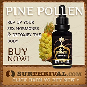 surthrival pine pollen gold