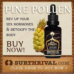 surthrival pine pollen gold
