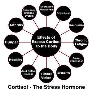 cortisol-300x294