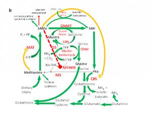 glycine-2