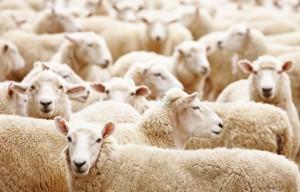 herd_immunity